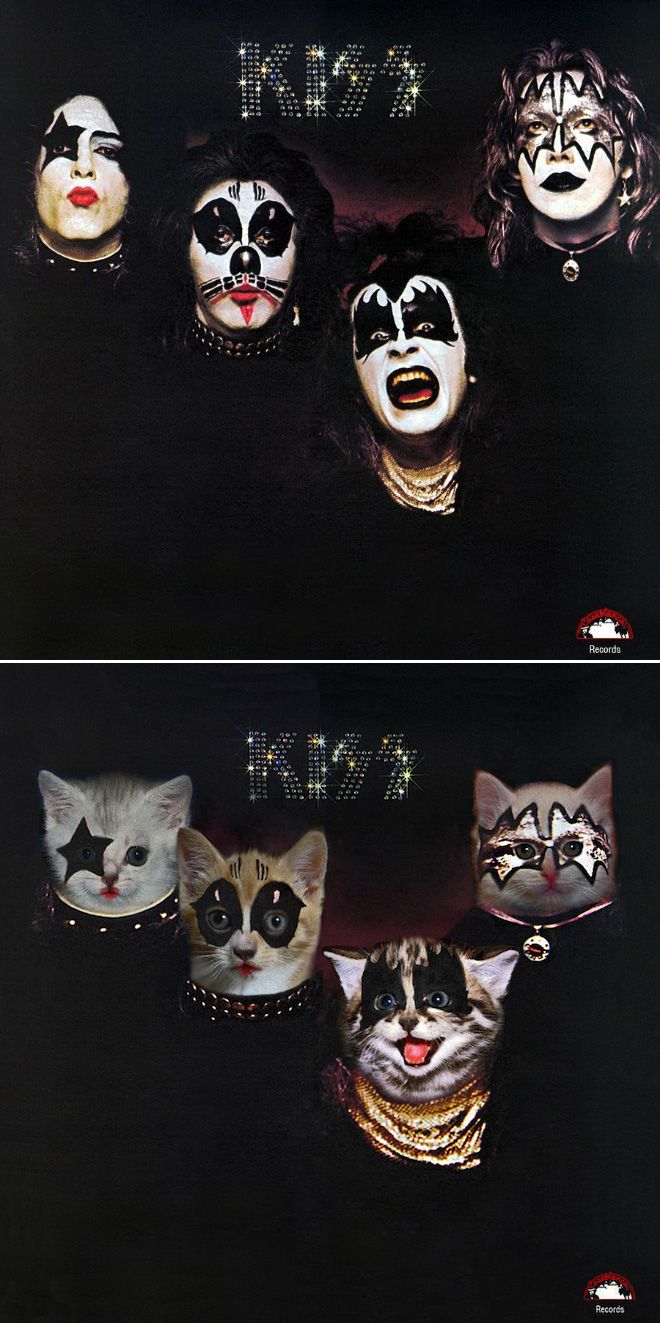 The Best Thing You Will See Today Classic Album Covers Recreated With Kittens Album Covers Famous Album Covers Classic Album Covers