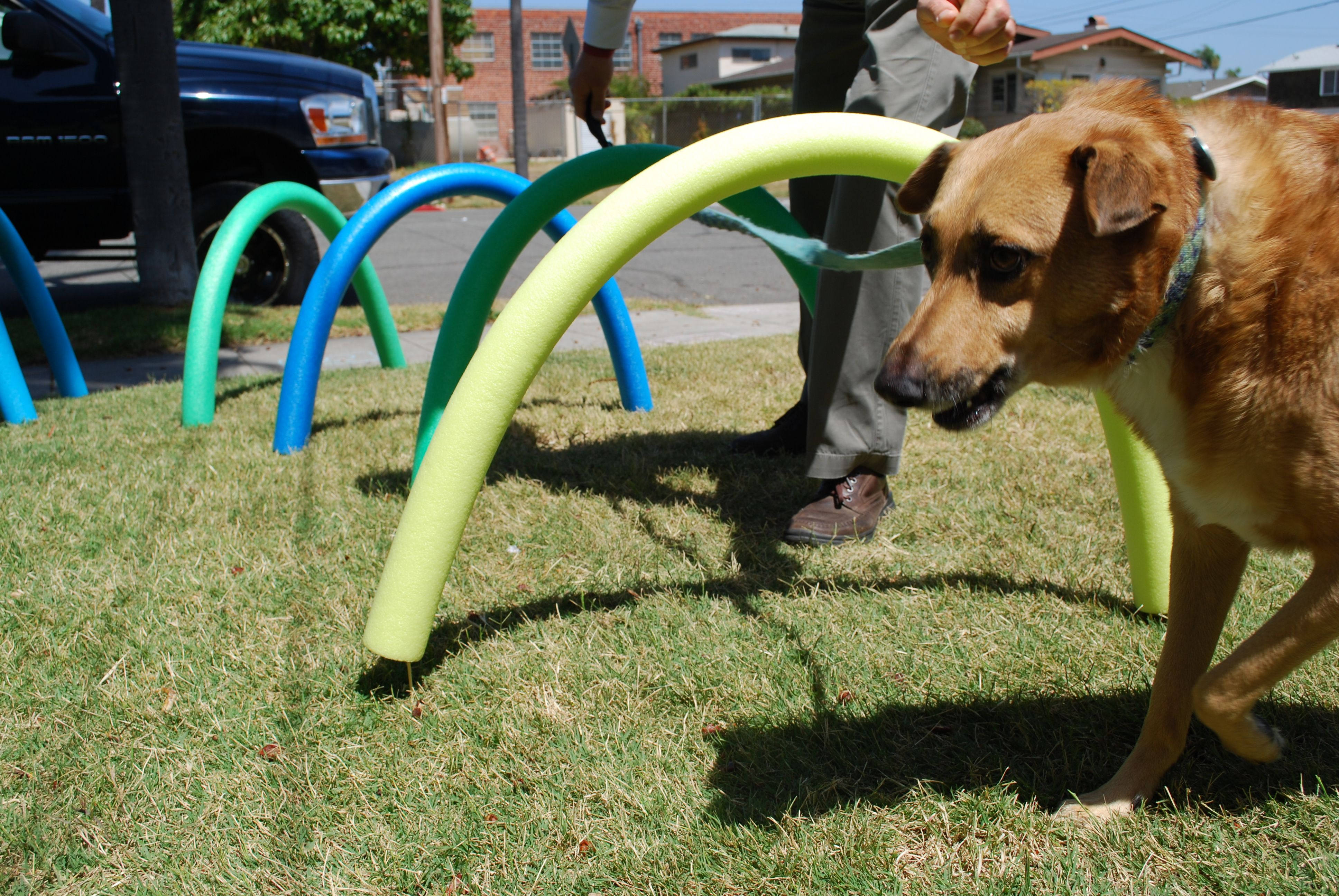 Puppy Agility Training Ideas