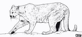 Mareo profundidad tratar con  Resultado de imagen para puma andino | Lion coloring pages, Coloring pages,  Lion images