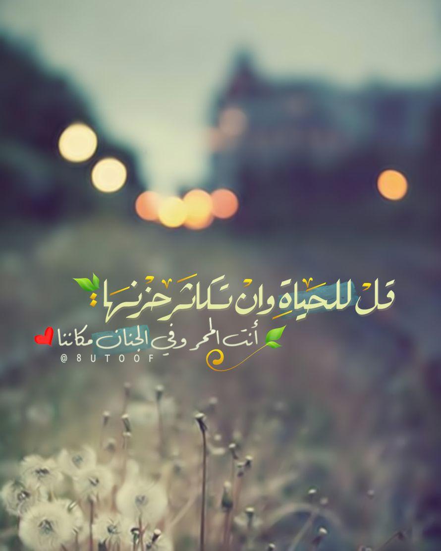 Tulip Romantic Words Arabic Quotes Motivational Phrases