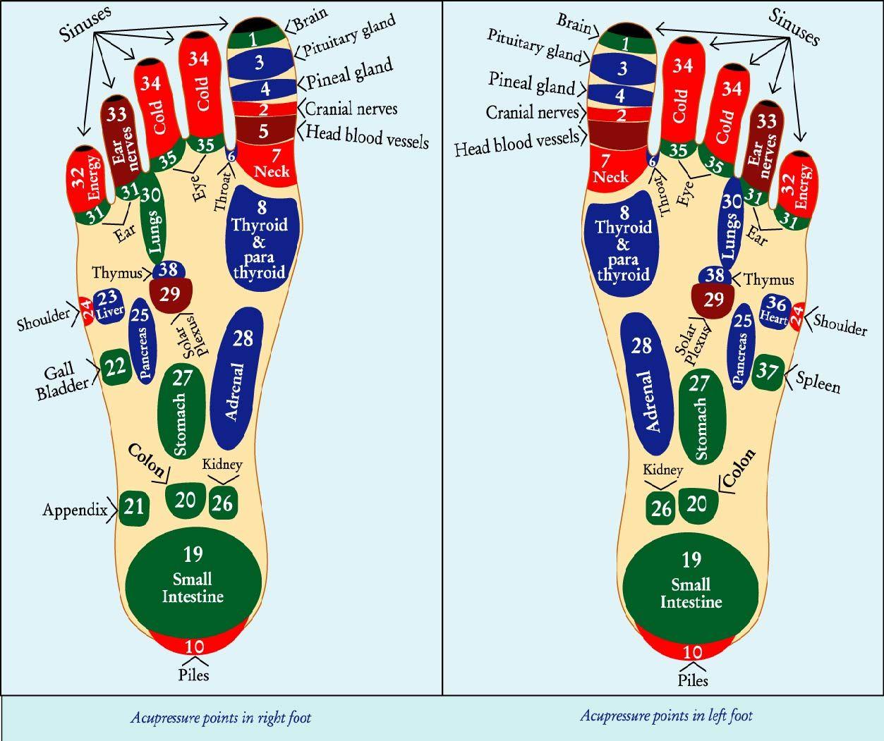 Pin by Edu2U on Health | Acupressure, Acupressure points ...