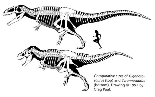 614 x 387 jpeg 34kBVastatosaurus