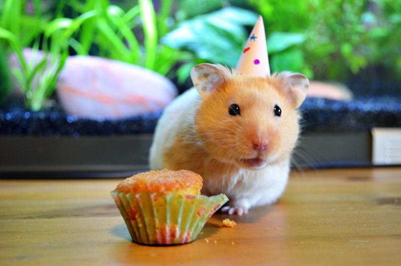 Хомяк картинки с днем рождения