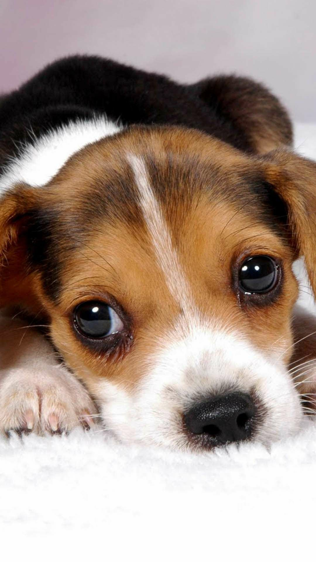 Pin by Jaelyn&Kyra Chenault on animals Cute beagles