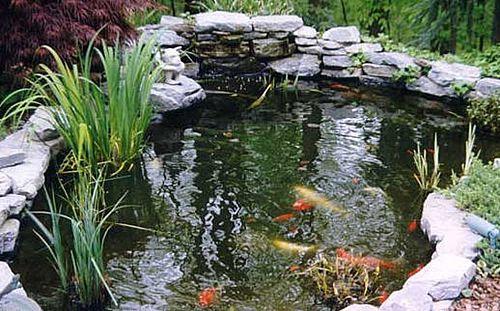 Crear un estanque en el jard n fuentes pinterest for Como hacer un estanque para peces casero