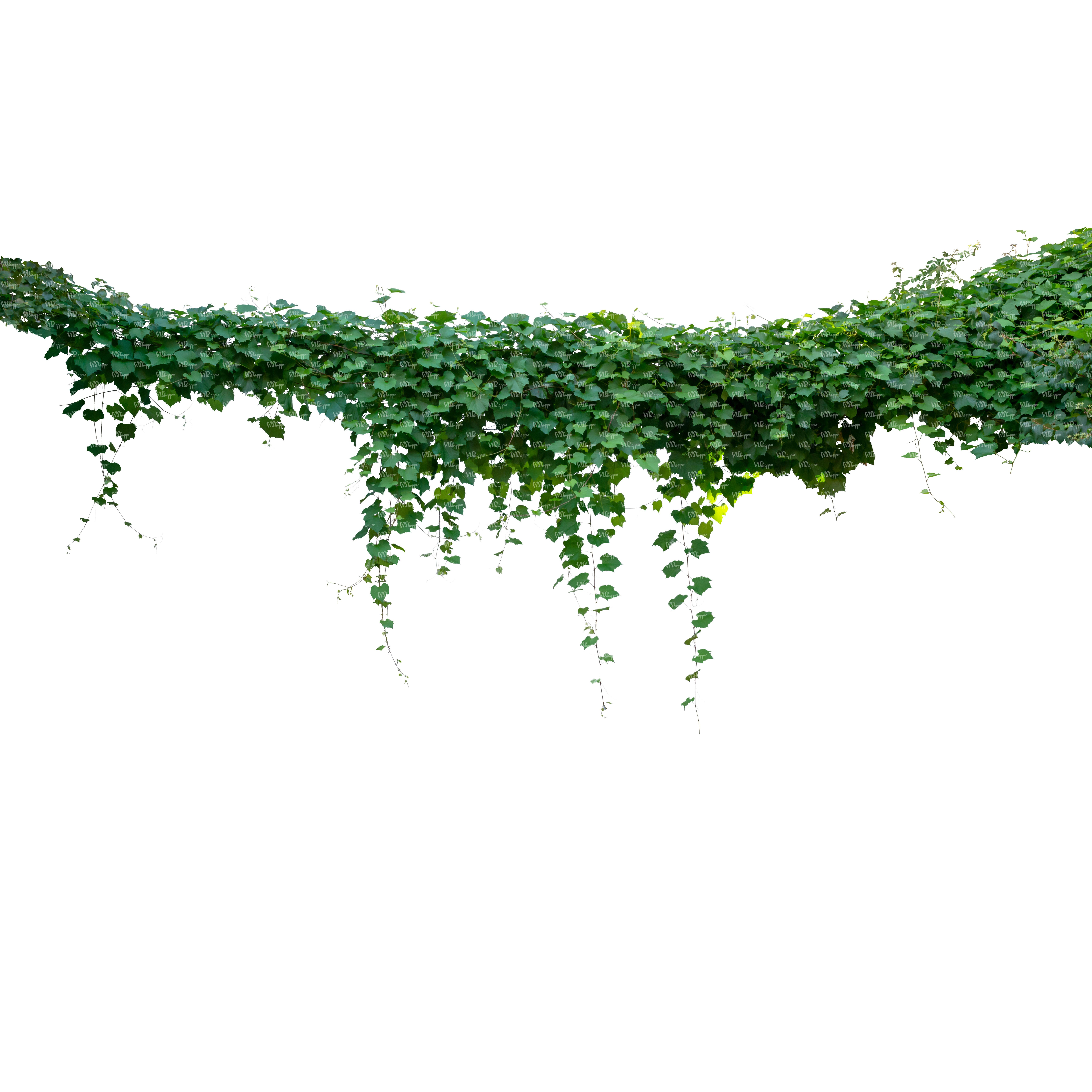 Pin En Cut Out Plants