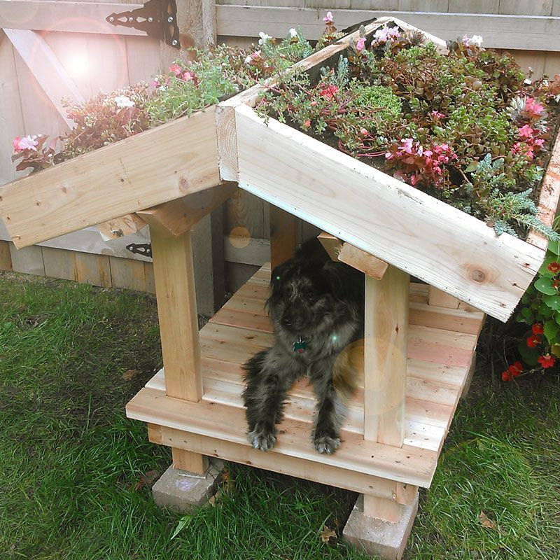 Don't just find non-toxic plants and flowers, create a dog ... on Non Grass Backyard Ideas  id=50457