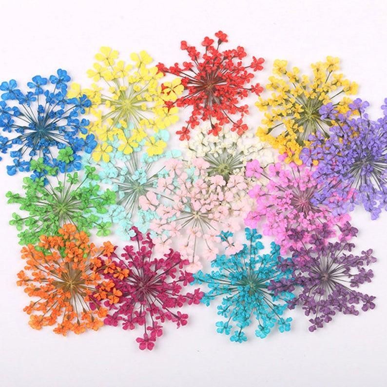 12/100 STK pro Packung 25-3cm Minoan Lace echte Trockenblumen | Etsy  The post 1…