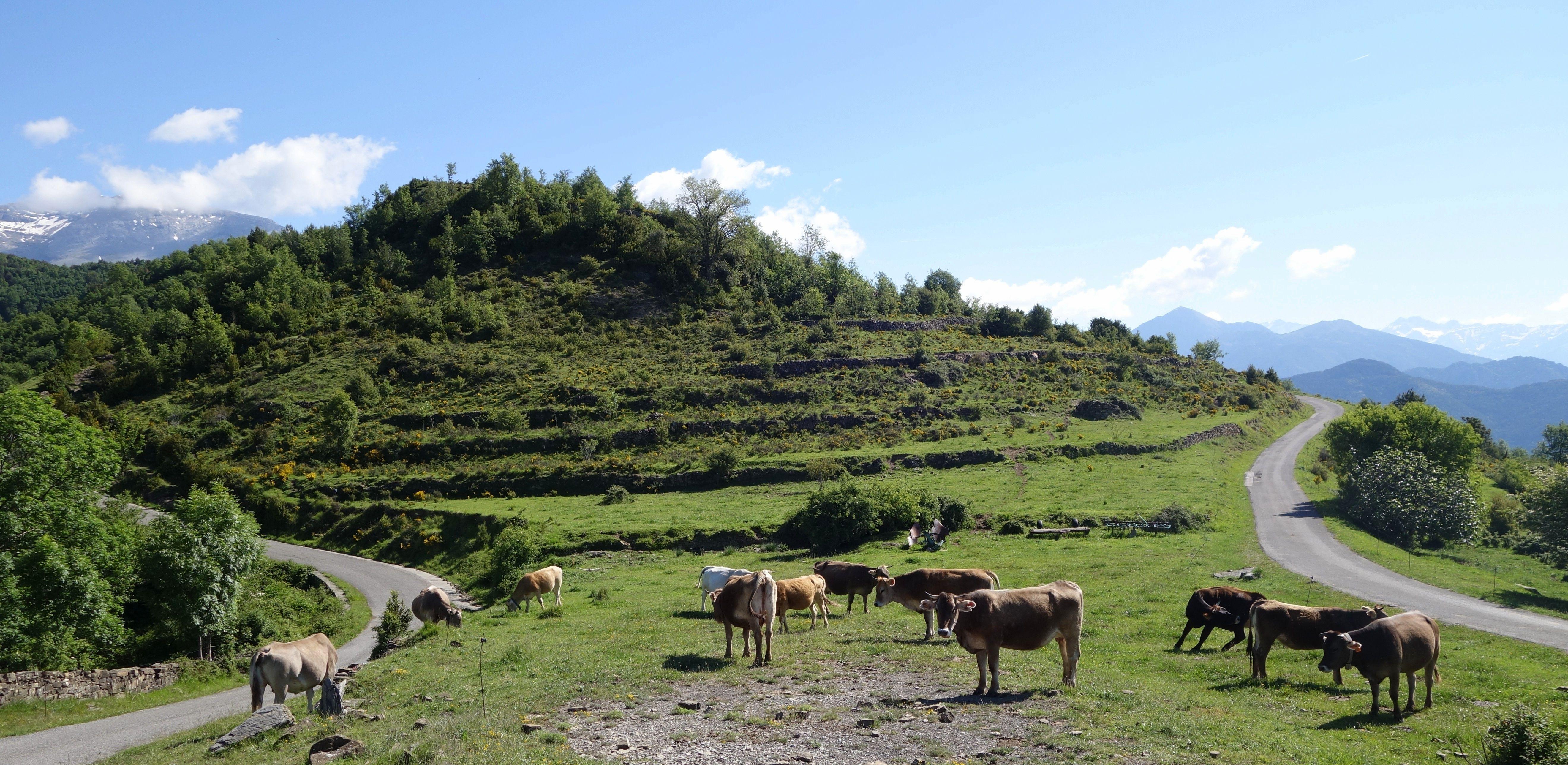 A la izquierda, la carretera de Bestué y, a la derecha, la de Escuaín