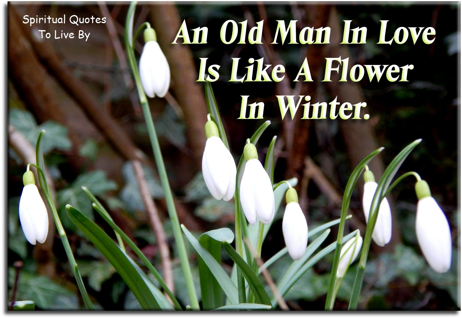An Old Man In Love Is Like A Flower In Winter Unknown Spiritual