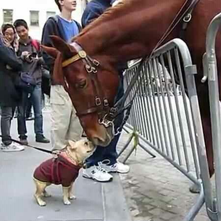 Dog & Horse
