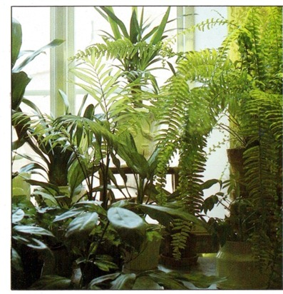 Growing Plants At A North Facing Window Indoor Plants 640 x 480