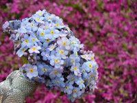 Bouquet Sposa Non Ti Scordar Di Me.Non Ti Scordar Di Me Bouquet Bouquet Decorazioni Floreali Floreale