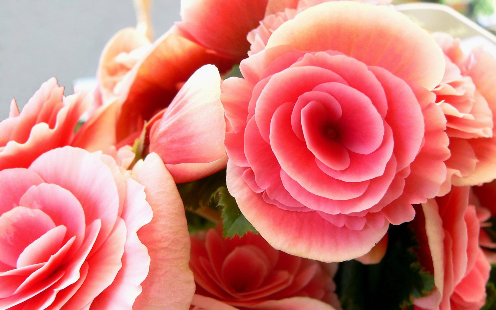 beautiful pink roses | smell the roses | pinterest | beautiful pink