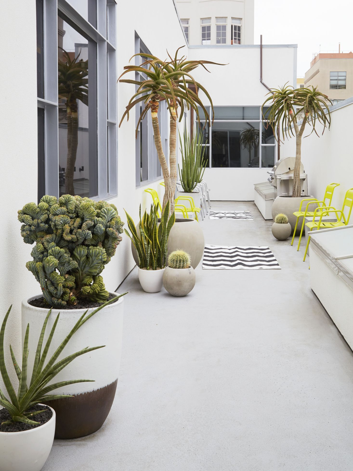 Low-Water Landscapes: 8 Ideas for Dry Gardens, from Designer Daniel Nolan #narrowbalcony A crested Myrtillocactus (M. geometrizans cristata) in the foreground shares a narrow balcony with potted Furcraea macdougalii and Aloe barberae. #gardenista #gardenideas #garden #urbangarden #narrowbalcony Low-Water Landscapes: 8 Ideas for Dry Gardens, from Designer Daniel Nolan #narrowbalcony A crested Myrtillocactus (M. geometrizans cristata) in the foreground shares a narrow balcony with potted Furcraea #narrowbalcony