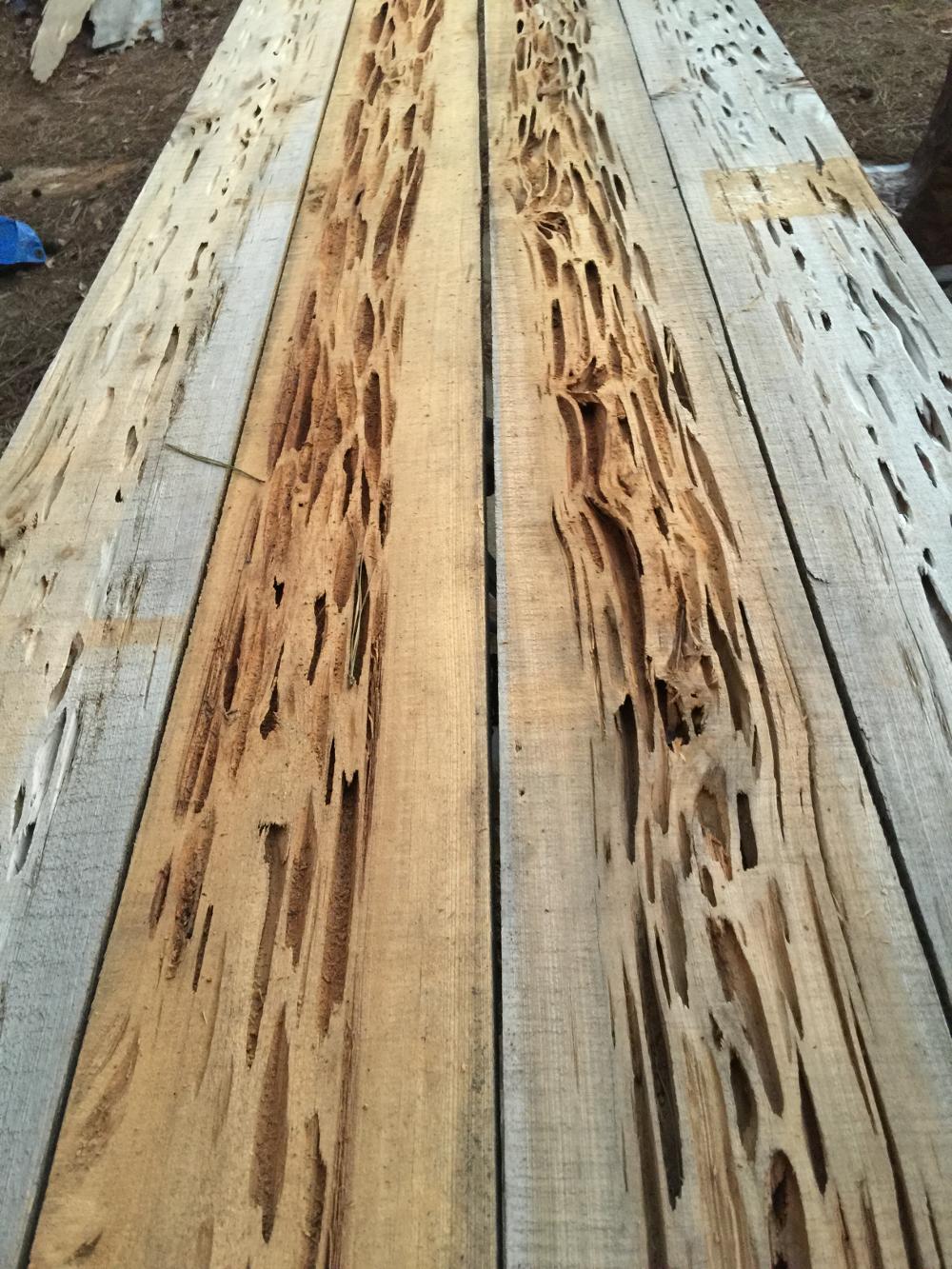 Pecky Cypress Table Board Kit