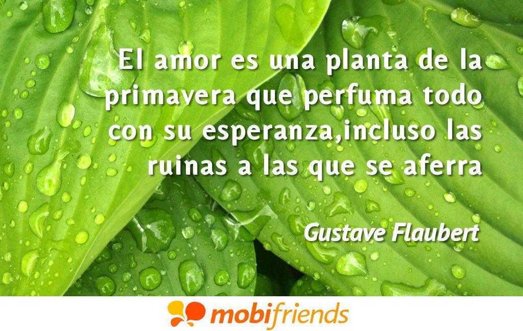 El amor es una planta de la primavera que perfuma todo con - Todo sobre las plantas ...
