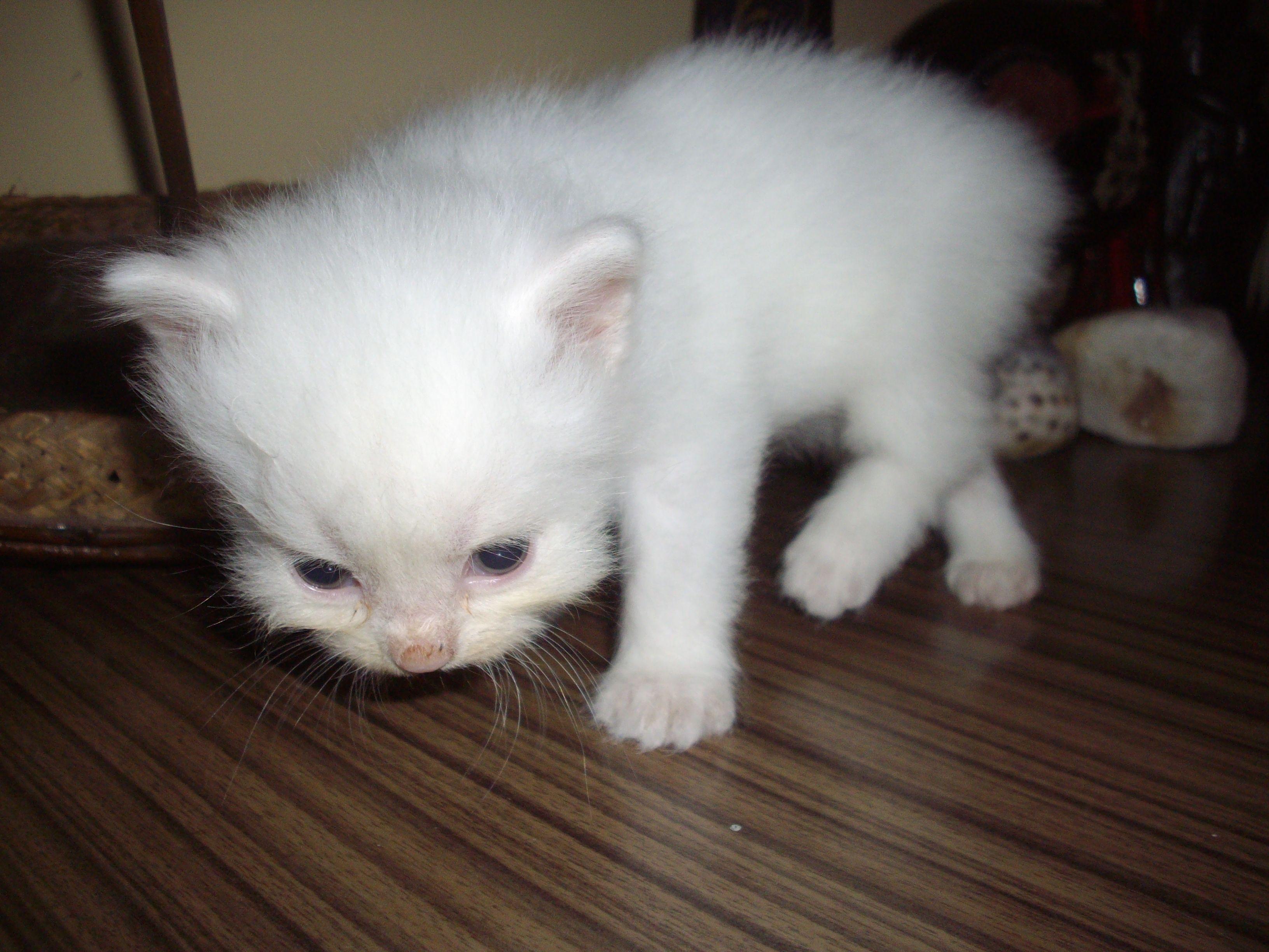 Funny Cat Pictures Cat Pics Funny Cat Pictures Persian Cat