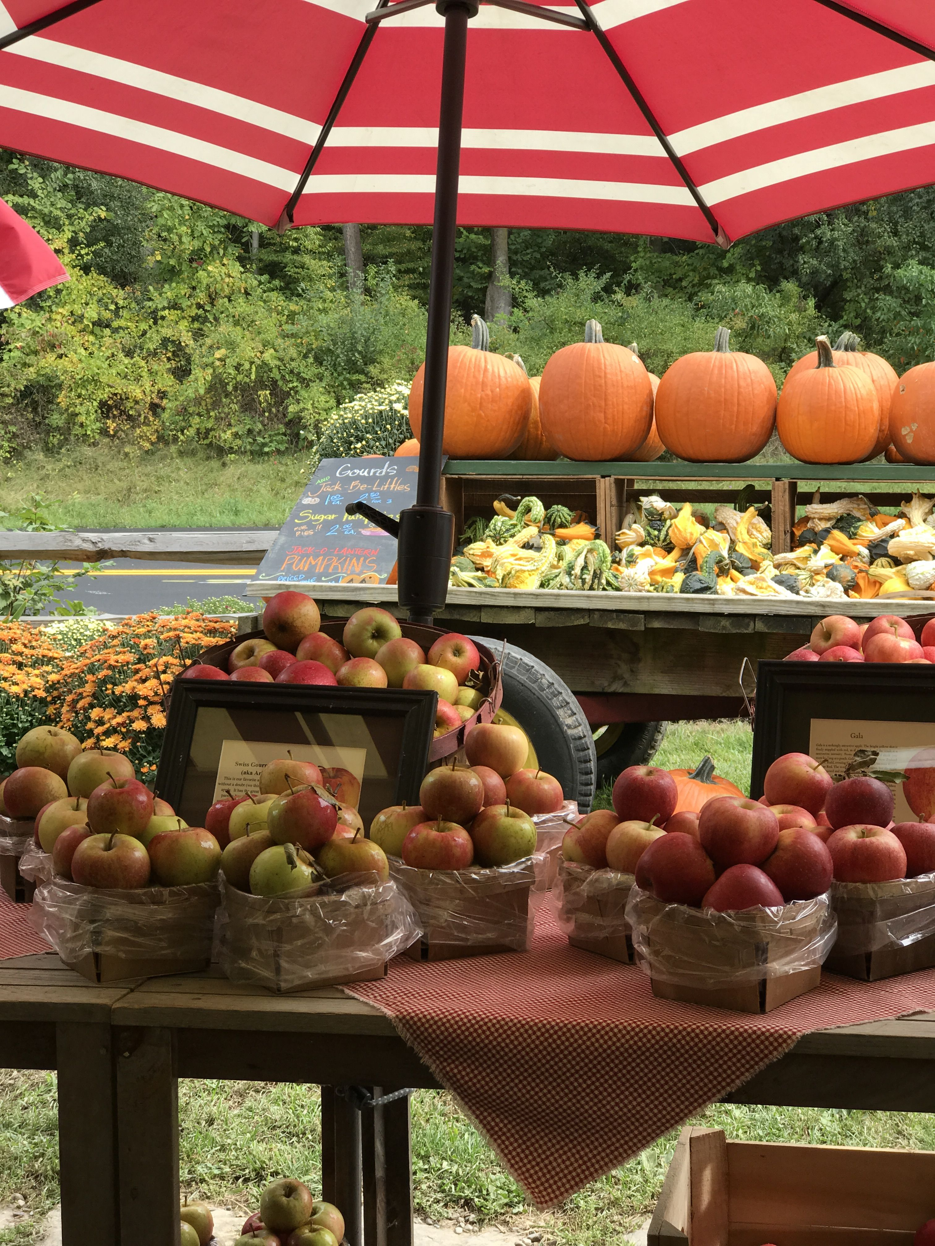 Apples!🍎 Hudson valley new york (With images) Hudson