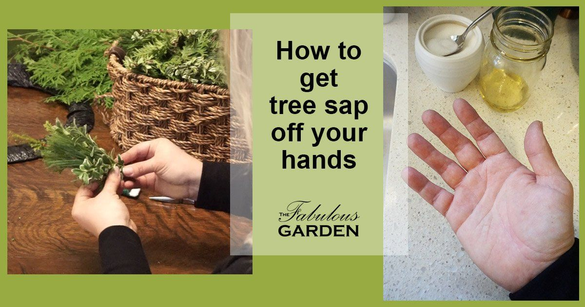 Get Tree Sap Off Your Hands With Two Ingredients From Your Kitchen The Fabulous Garden Tree Sap Pine Branch Sap