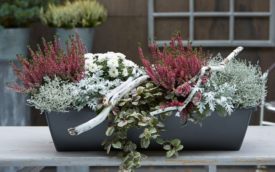 Gartencenter Berghausener grün erleben Herbstliche Pflanzideen