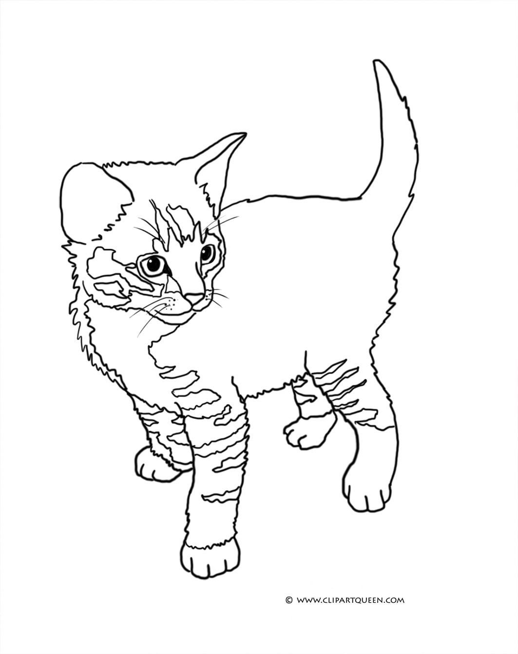 Tabby Cat Coloring Page Youngandtae Com Cat Coloring Book Cat Coloring Page Kitten Coloring Book