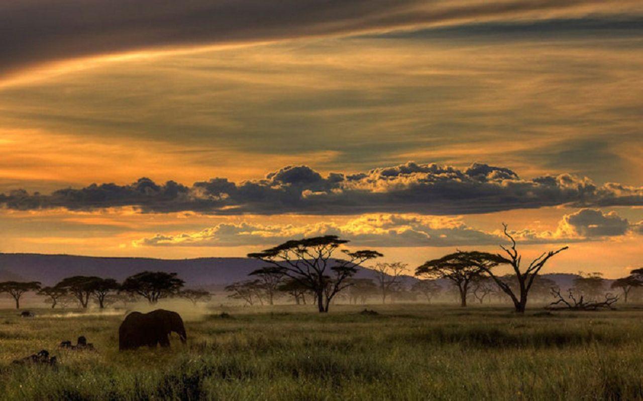 Safari Wallpaper African Safari Africa Tanzania