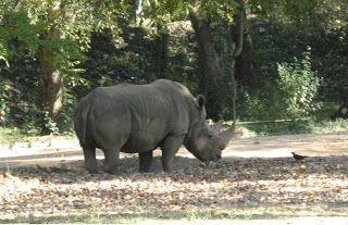 fb1f0df4aeb1fec523aed26bf4a0bbab - Mysore Zoo Sri Chamarajendra Zoological Gardens