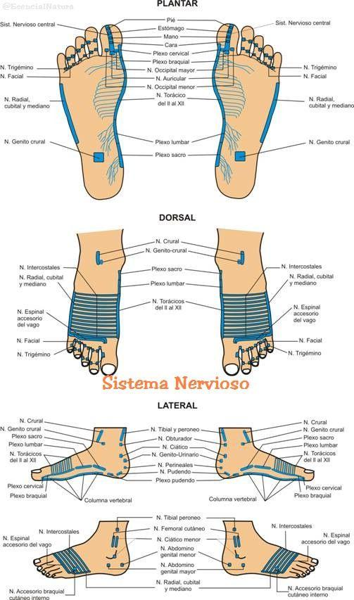 El manos durante en nervioso dolor embarazo y pies