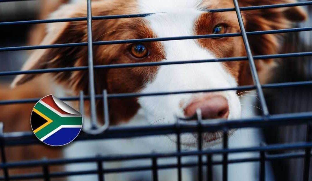 How Do I Move My Pets To Australia From South Africa Pets