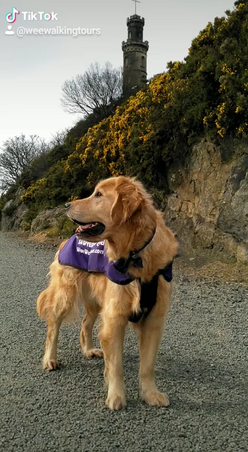 (🔊on) Flying into the future...where we hope to see you all healthy and well! 😀🐕🐾🙏 Greetings to all from Sawyer and all of us here at #WeeWalkingTours!  #SawyerTheGoldenGuide #Edinburgh #CaltonHill #OnlyInScotland #NelsonMonument #VisitScotland