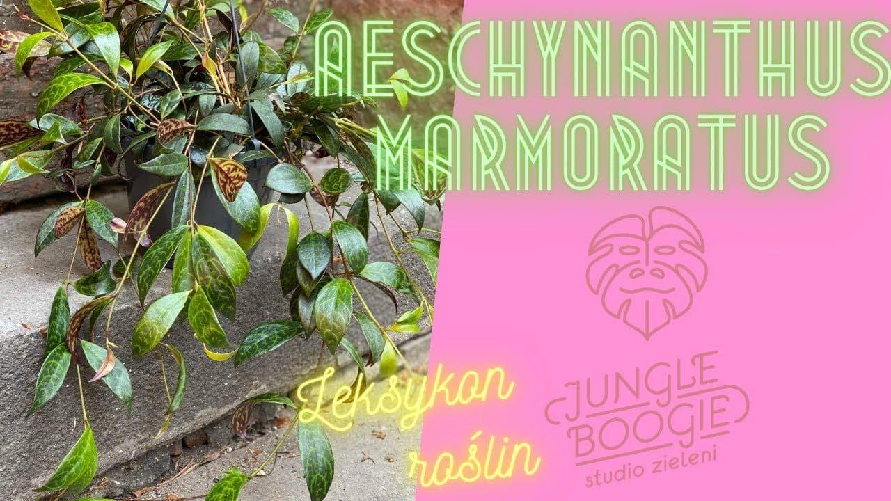 Aeschynathus Marmoratus Eszynantus Marmurkowy Czyli Leksykon Roslin Jungle Boogie Odc 3 Jungle Boogie Jungle Boogie Book Cover Books
