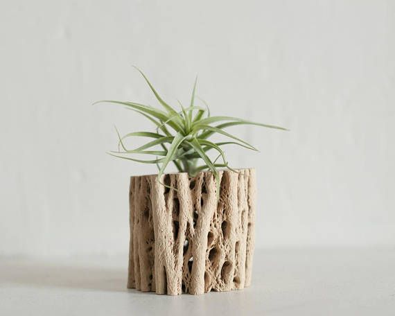 Cholla wood air plant holder office plant holder air plant