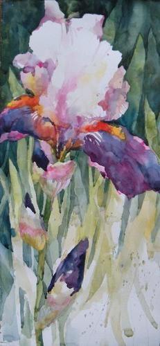 Iris Watercolors  Annelein Beukenkamp