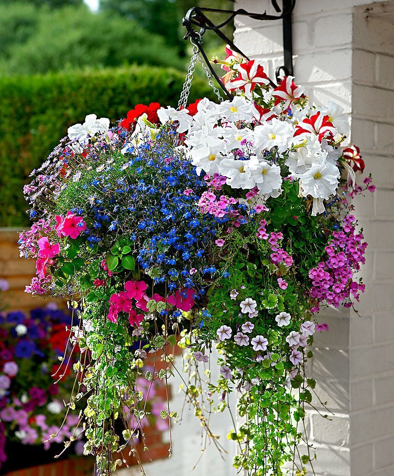 Using Hanging Flower Basket Ideas Is A Very Good Option If You