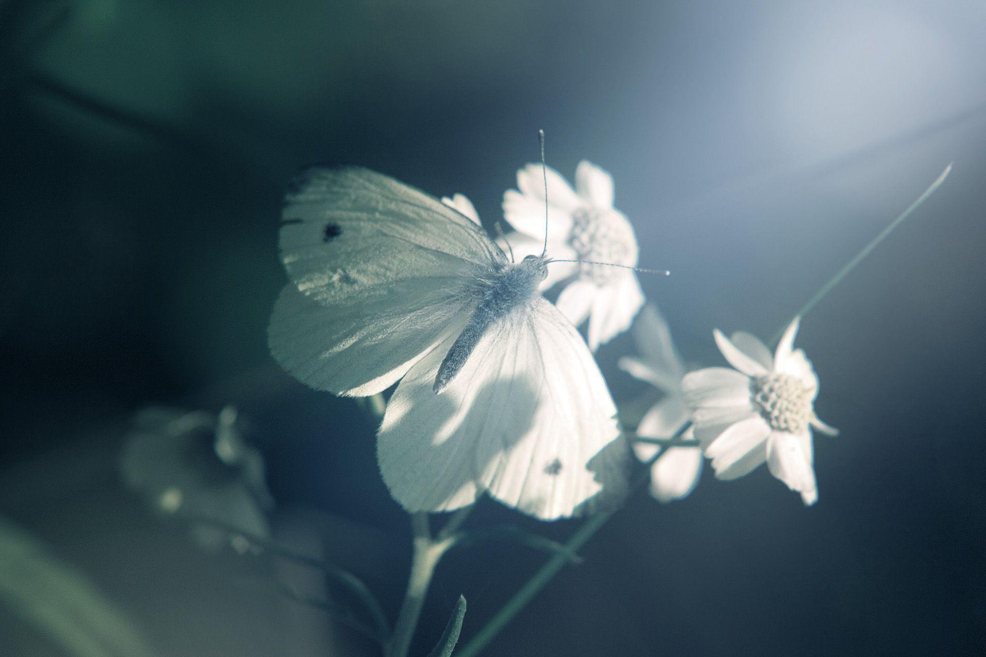 бабочка фото картинки для детей