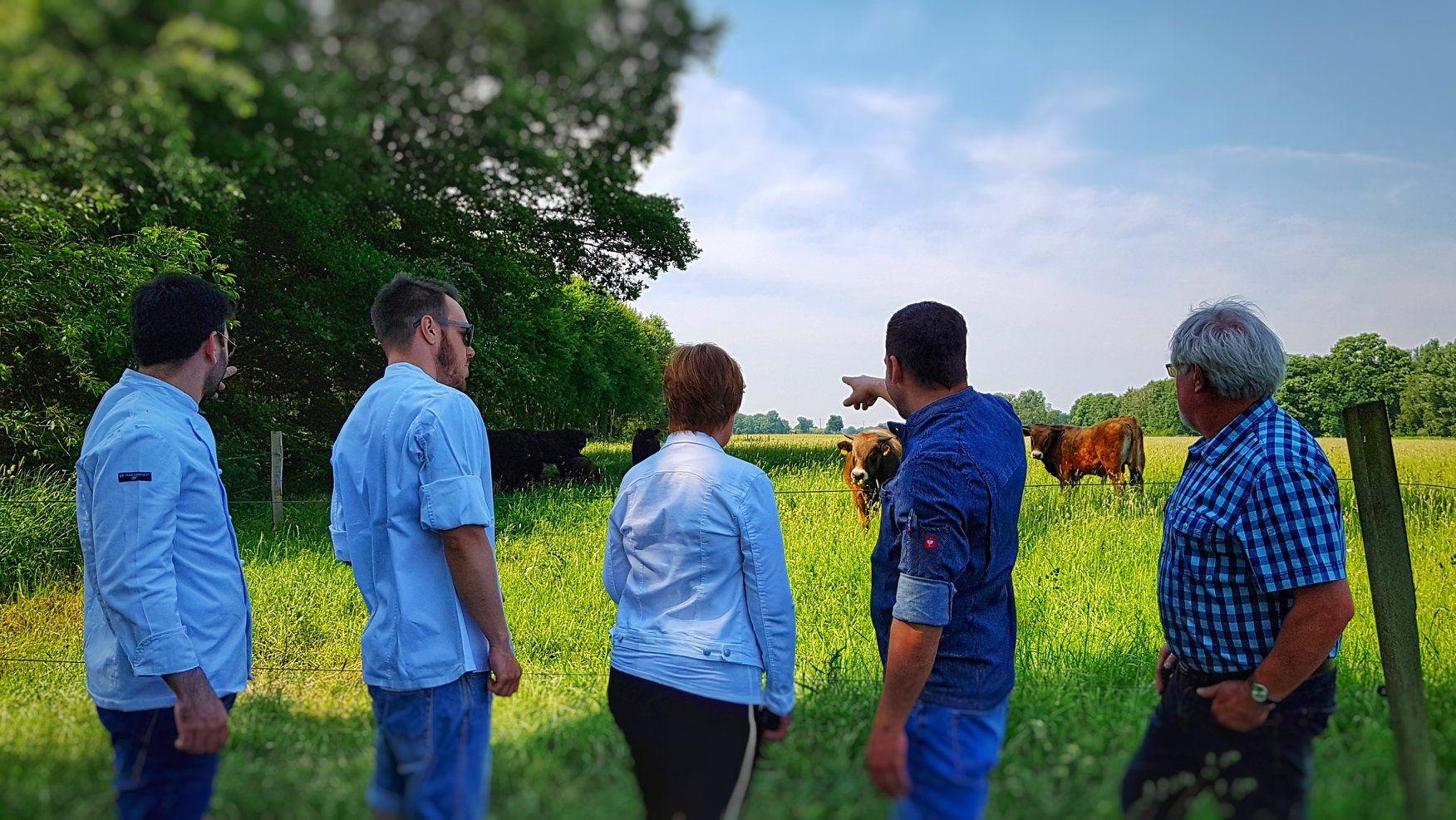 Galloways Sind Eine Dominant Hornlose Rinderrasse Sie Stammen Ursprunglich Aus Dem Sudwesten Schottlands Und Sind Heut Restaurant Widerstandsfahig Palmengarten