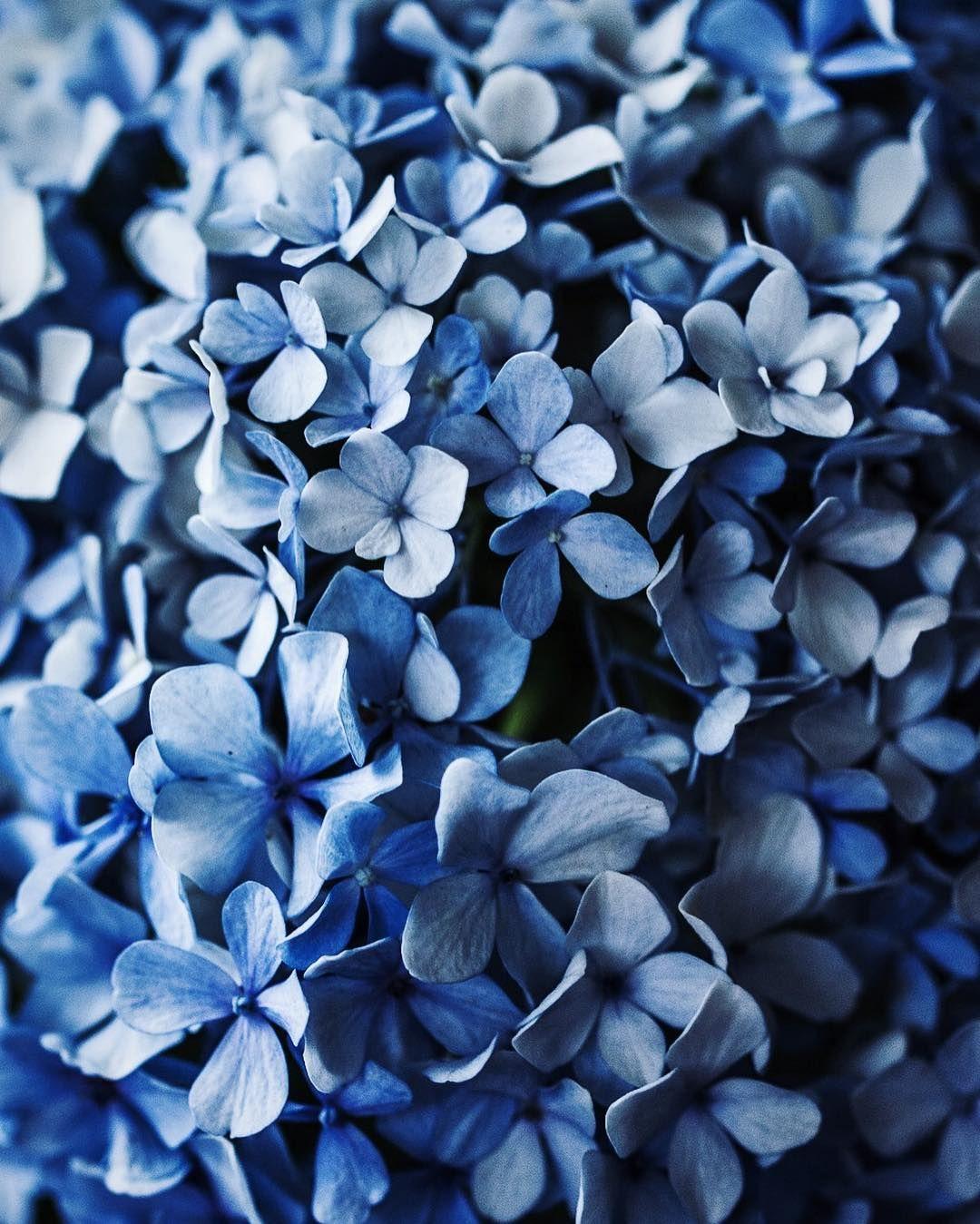 Голубая картинка на телефон