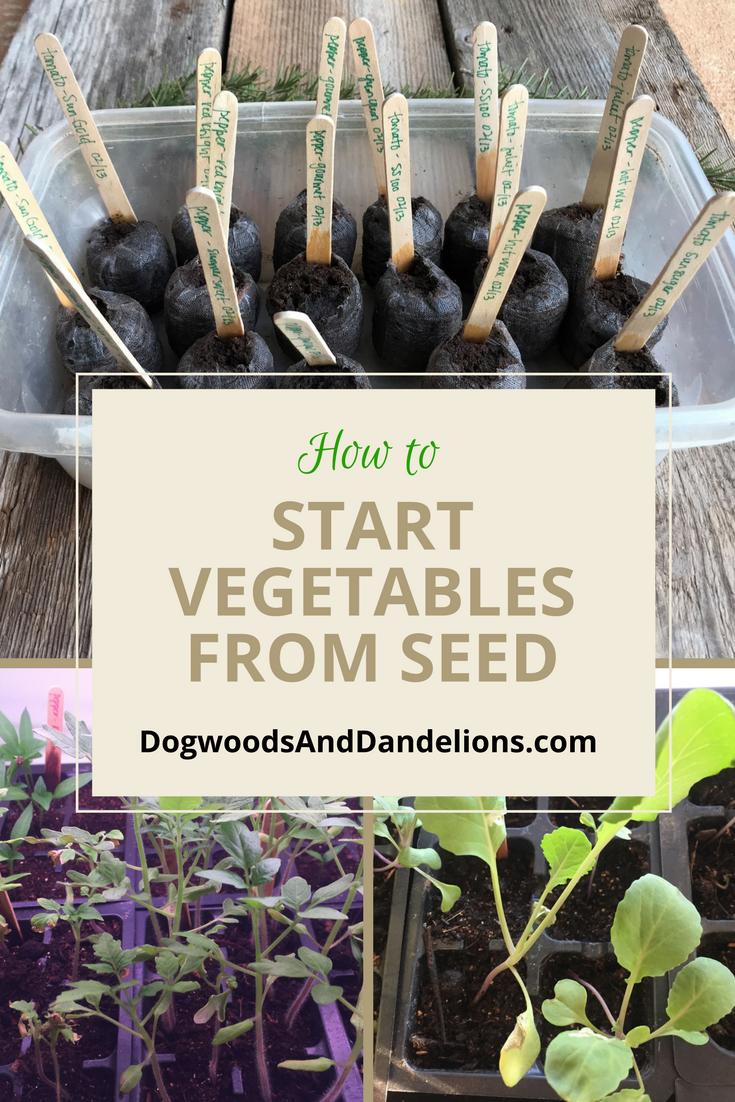 How To Start Vegetables From Seed Vegetable Garden Planner Gardening For Beginners Home Vegetable Garden