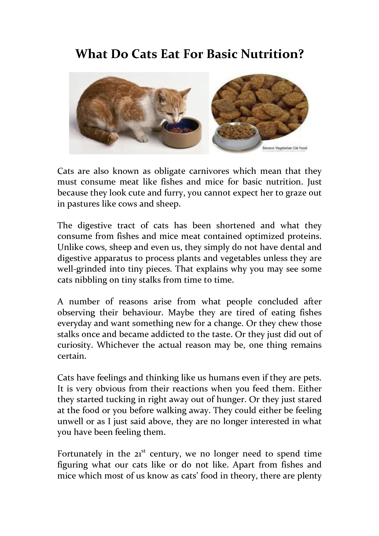 What Do Cats Eat For Basic Nutrition By Amuro7 Nutrition Feline