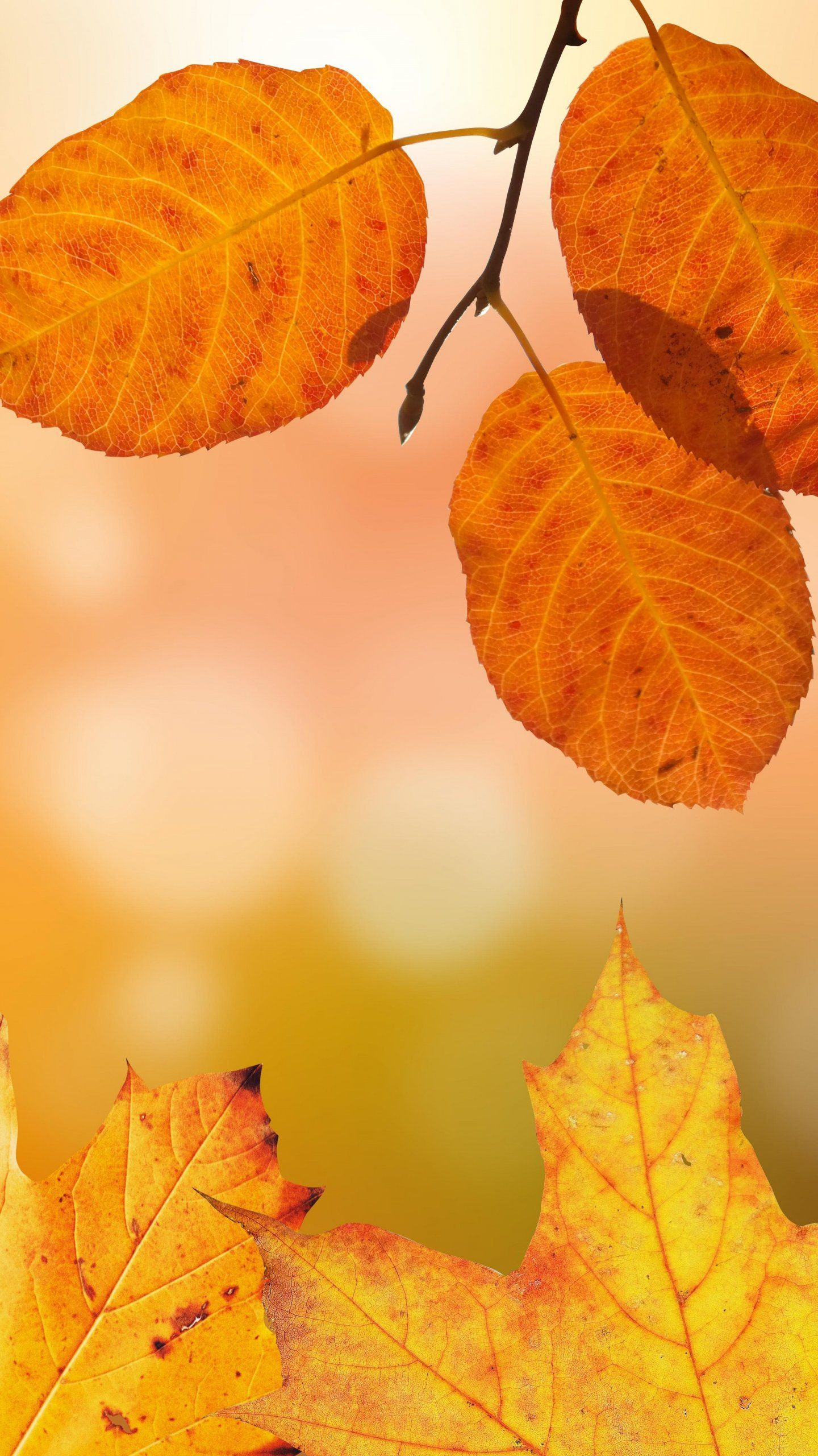 Autumn Leaves Wallpaper Iphone Android Desktop Backgrounds Leaves Wallpaper Iphone Autumn Leaves Wallpaper Minimal Wallpaper