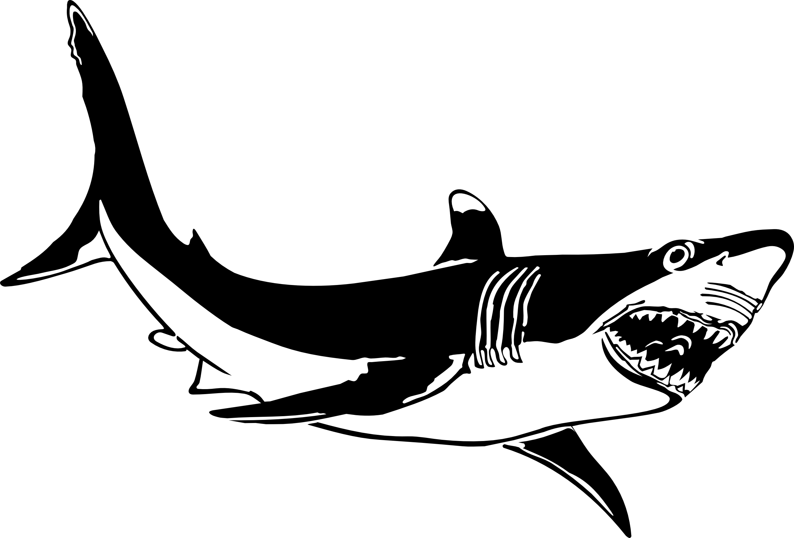 Great White Shark Clip Art Hari
