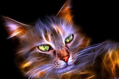 Fractal Cat Hd Wallpaper Free Hq Wallpaper Cats Cat Art