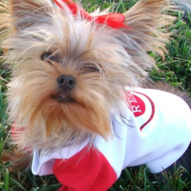My daddy loves the Cincinnati Reds