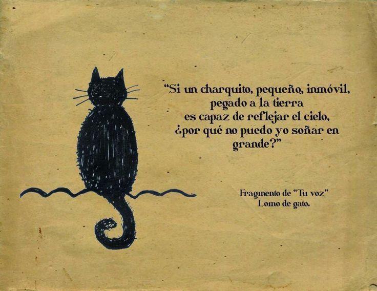 """... Si un charquito, pequeño, inmóvil, pegado a la tierra es capaz de reflejar el cielo. ¿Por qué no puedo yo soñar en grande?. Fragmento de """"Tu voz"""" Lomo de gato."""