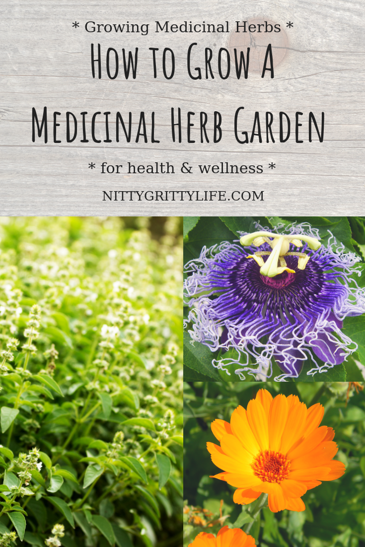 Growing a Medicinal Herb Garden for Health & Wellness is part of Medicinal herbs garden, Medicinal herbs, Herb garden, Medicinal plants, Herbs, Home vegetable garden - Growing herbs and medicinal plants is a sustainable practice to support the health and wellness of your family and garden
