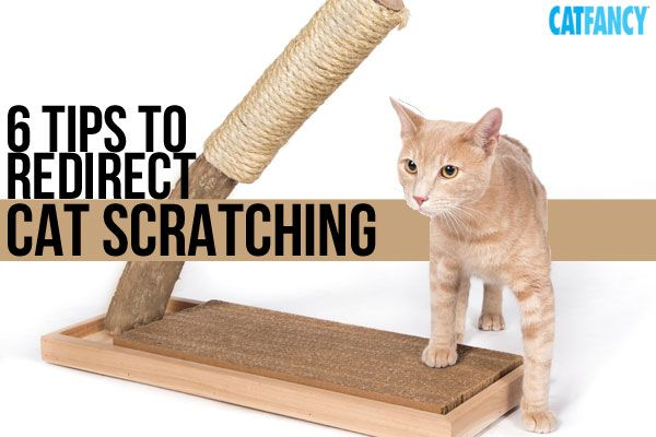 These six tips can help you redirect your cat's scratching to a spot that's not your furniture.