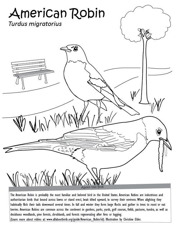 Red Robin Coloring Pages American Robin Coloring Page In 2020 Bird Coloring Pages Animal Coloring Pages Coloring Pages Winter