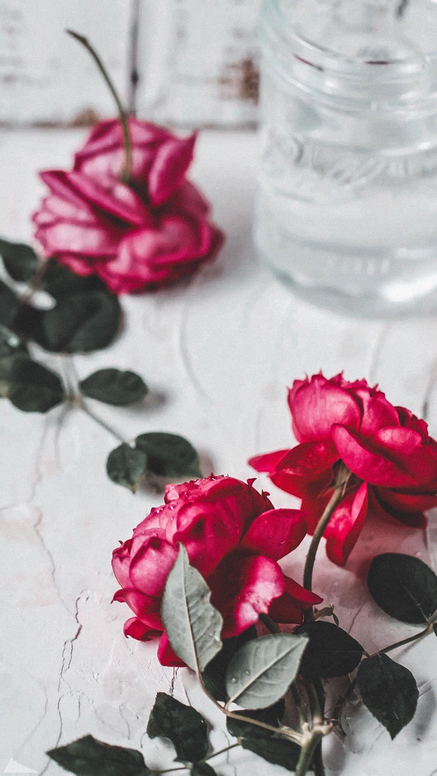 Обои цветок, красная. Цветы foto 14