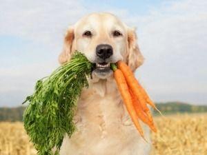 Toma conciencia sobre la alimentación de tu perro  Nuevo post en: tucocinasana.micd.tecnocampus.cat